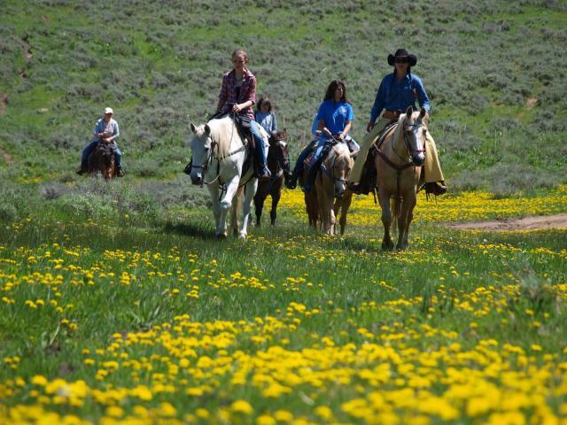 Horseback Riding & Tours